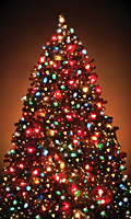 WP107 -  Christmas Tree Window Poster